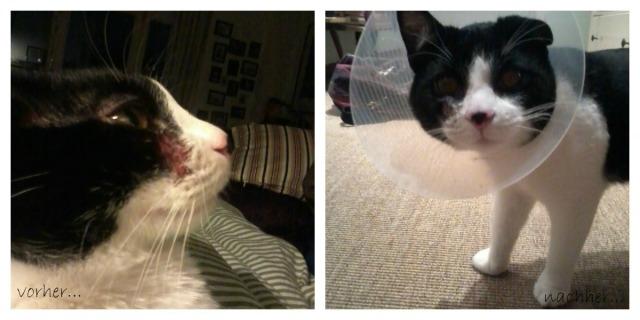 Leben mit Katzen: Schon wieder Lampenschirm