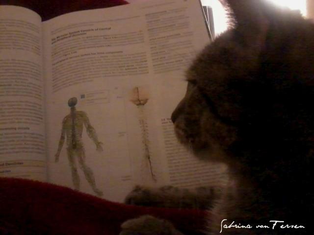 paul lernt bio